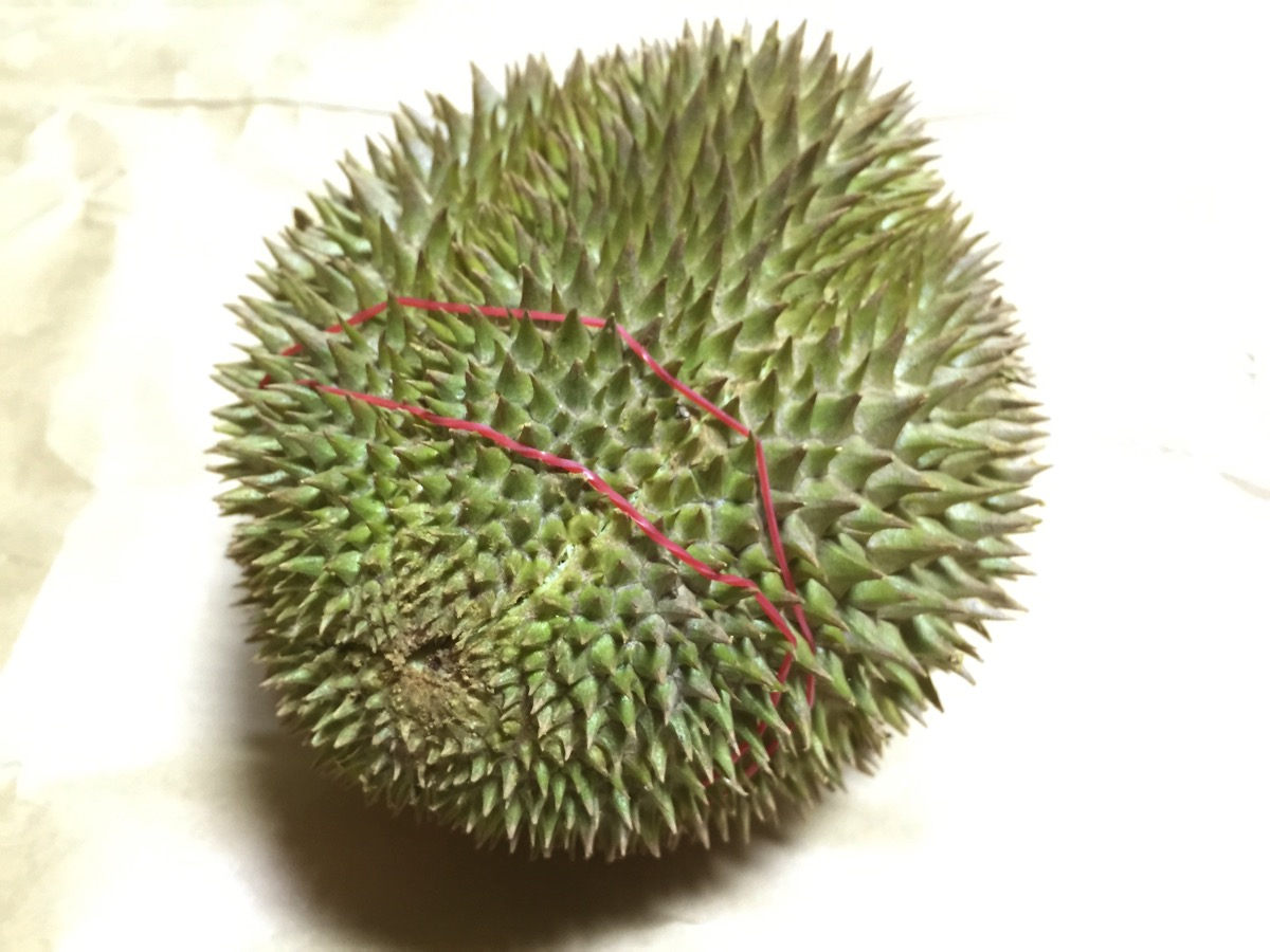 Golden Phoenix Durian - Outer fruit view - bottom