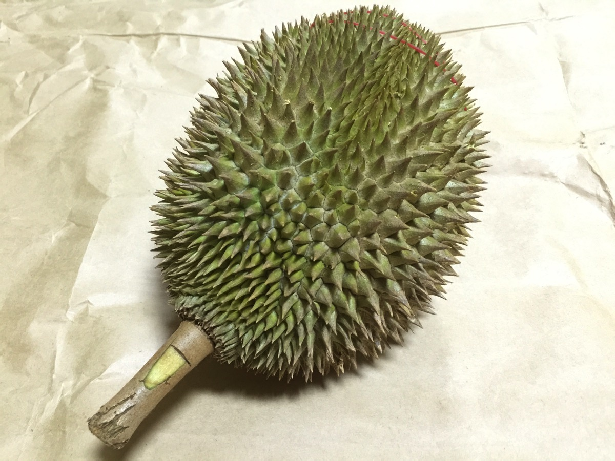 Golden Phoenix Durian - Outer fruit view - top