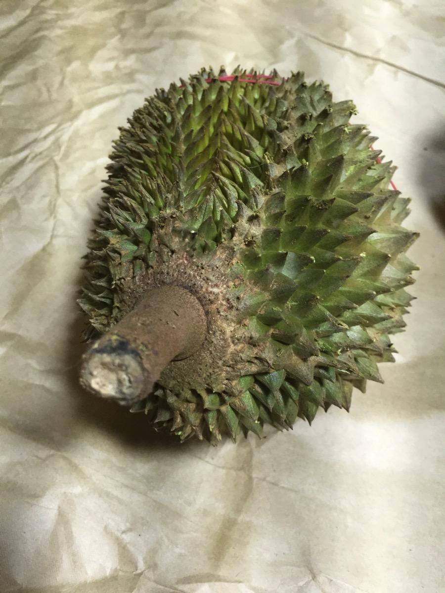 Maoshang Wang Durian - Outer fruit view - top 2