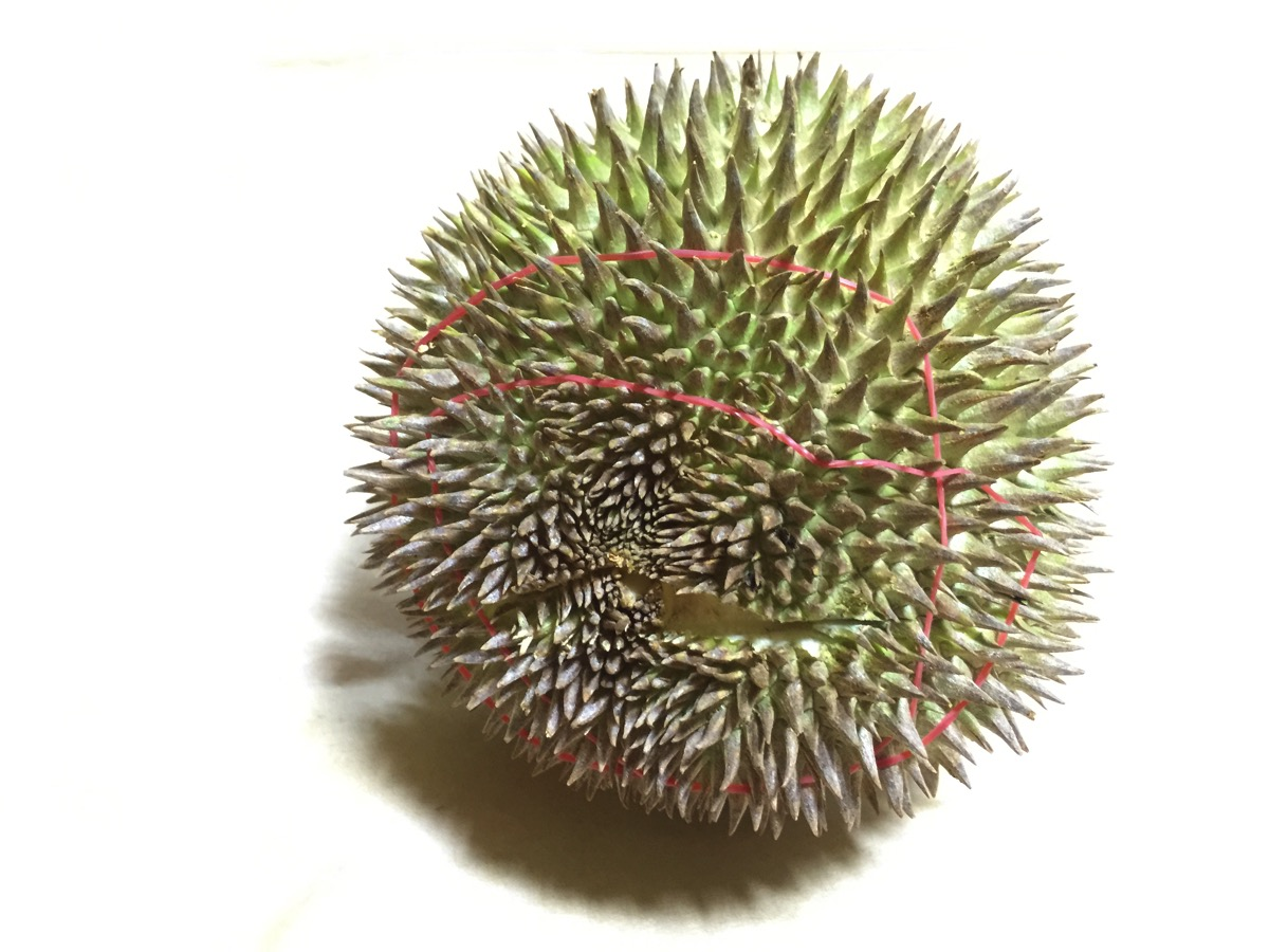 Red Meat Durian - Outer fruit view - bottom