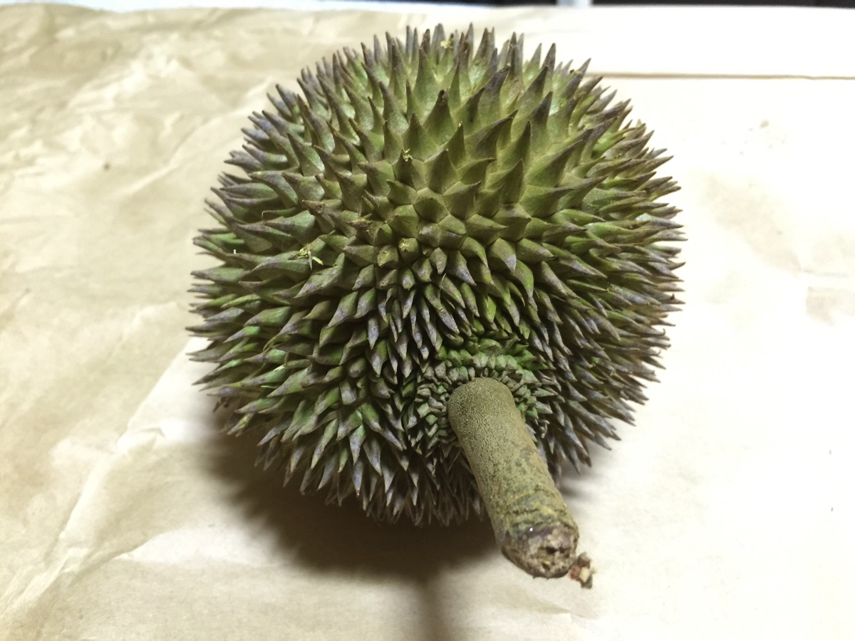 Red Seed Durian - Outer fruit view - top
