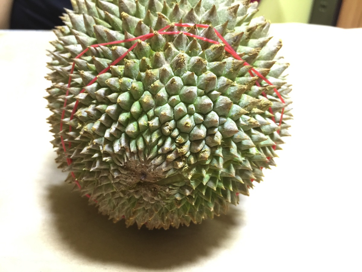 Small Seed Durian - Outer fruit view - bottom