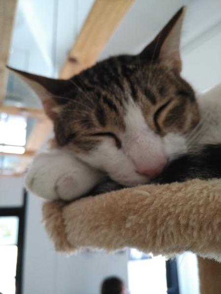 TheCatCafe - Cat asleep