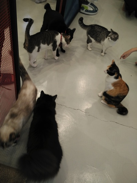 TheCatCafe - Cats playground