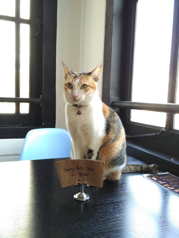 TheCatCafe - Standing cat